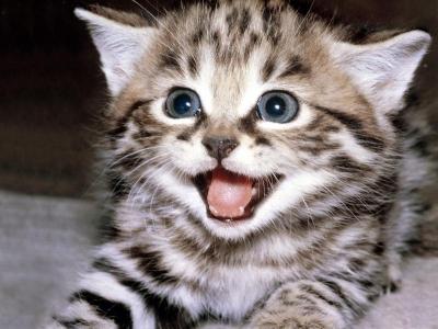 في حادثة غريبة .. قطة تنقذ حياة مسنة في منطقة جبل عمان !!