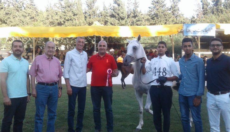 ختام البطولة الوطنية للخيول العربية الاصيلة