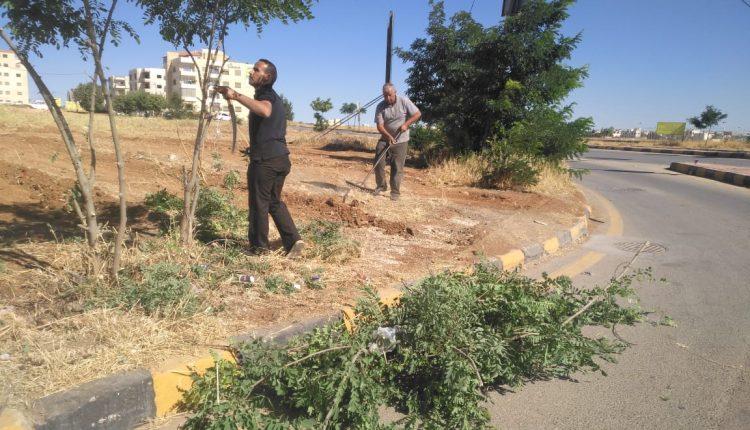 اطلقت بلدية مادبا الكبرى حملة نظافه وتقليم للاشجار ، على مداخل المحافظة.