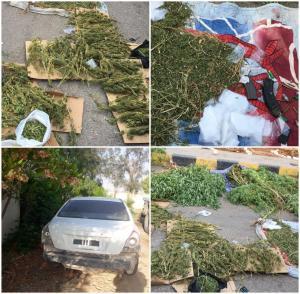 بالفيديو .. القبض على مجموعة من مروجي مخدرات وضبط 1500 شتلة ماريجوانا في الشونة الجنوبية