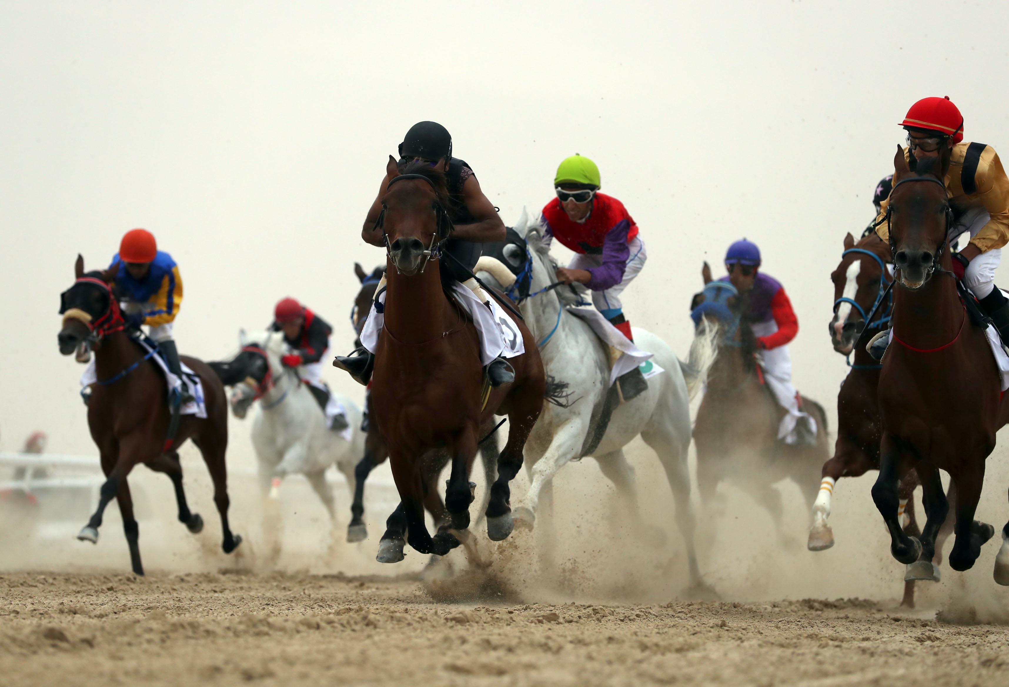 انطلاق سباق الخيول العربية الأصيلة يوم الجمعة 27 نوفمبر الجاري