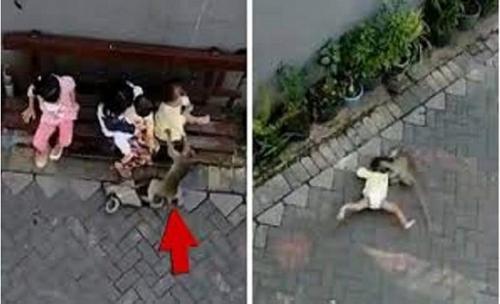 بالفيديو :ليست نكتة .. بالفيديو قرد ينفذ محاولة اختطاف طفل في اندونيسيا